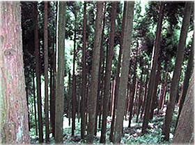 間伐展示林の写真