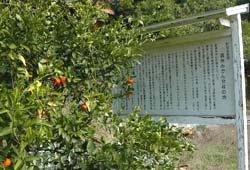 温州みかん発祥の地