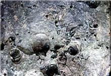 獅子島の化石
